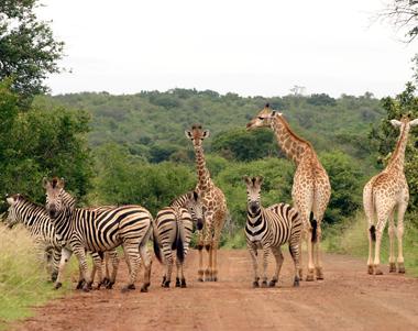 Parc-Kruger